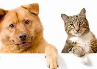 População terá mais um domingo para levar cães e gatos para serem vacinados contra a raiva