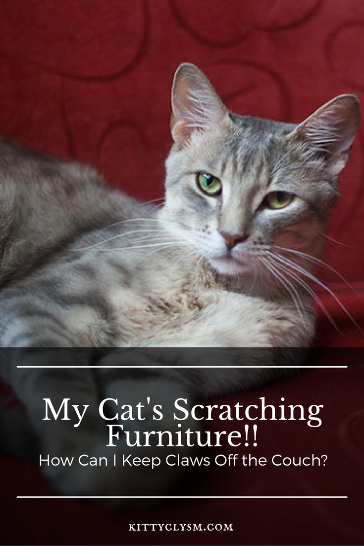 Stop Claws Off The Couch How To Train Cats To Not Scratch