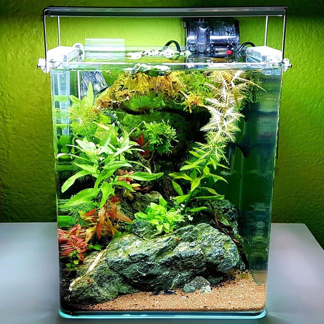 Shrimp Tank In 2020 Shrimp Tank Planted Aquarium Aquarium Maintenance
