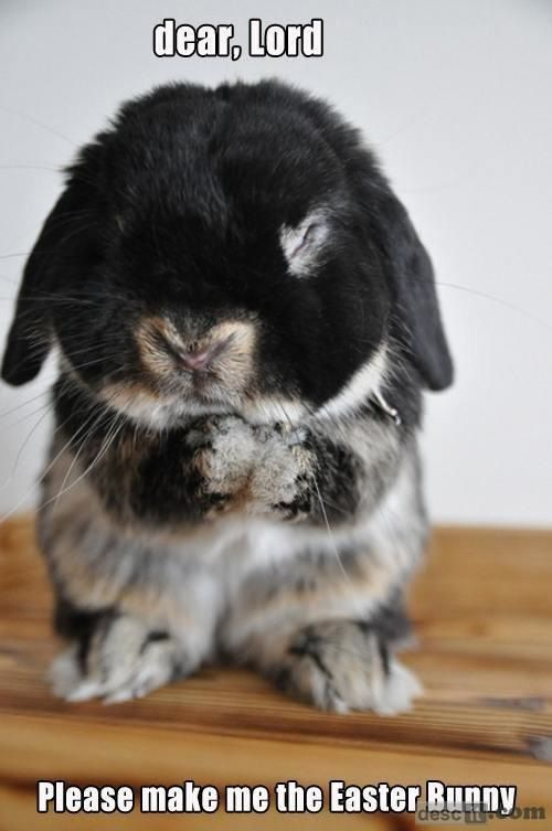 Dear Lord, please make the Easter Bunny.    Omgg bunnies are my weakness.