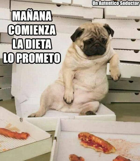 Manana Pugs Divertidos Chistes Graciosos De Animales Memes Divertidos Sobre Perros