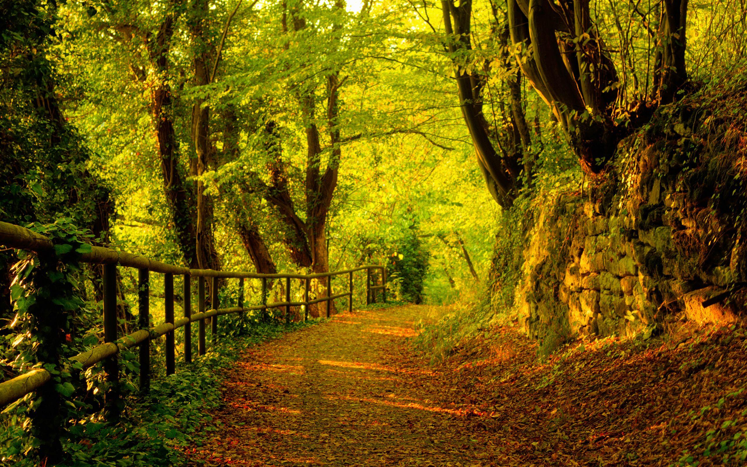 Nature Wallpaper Image September Autumn
