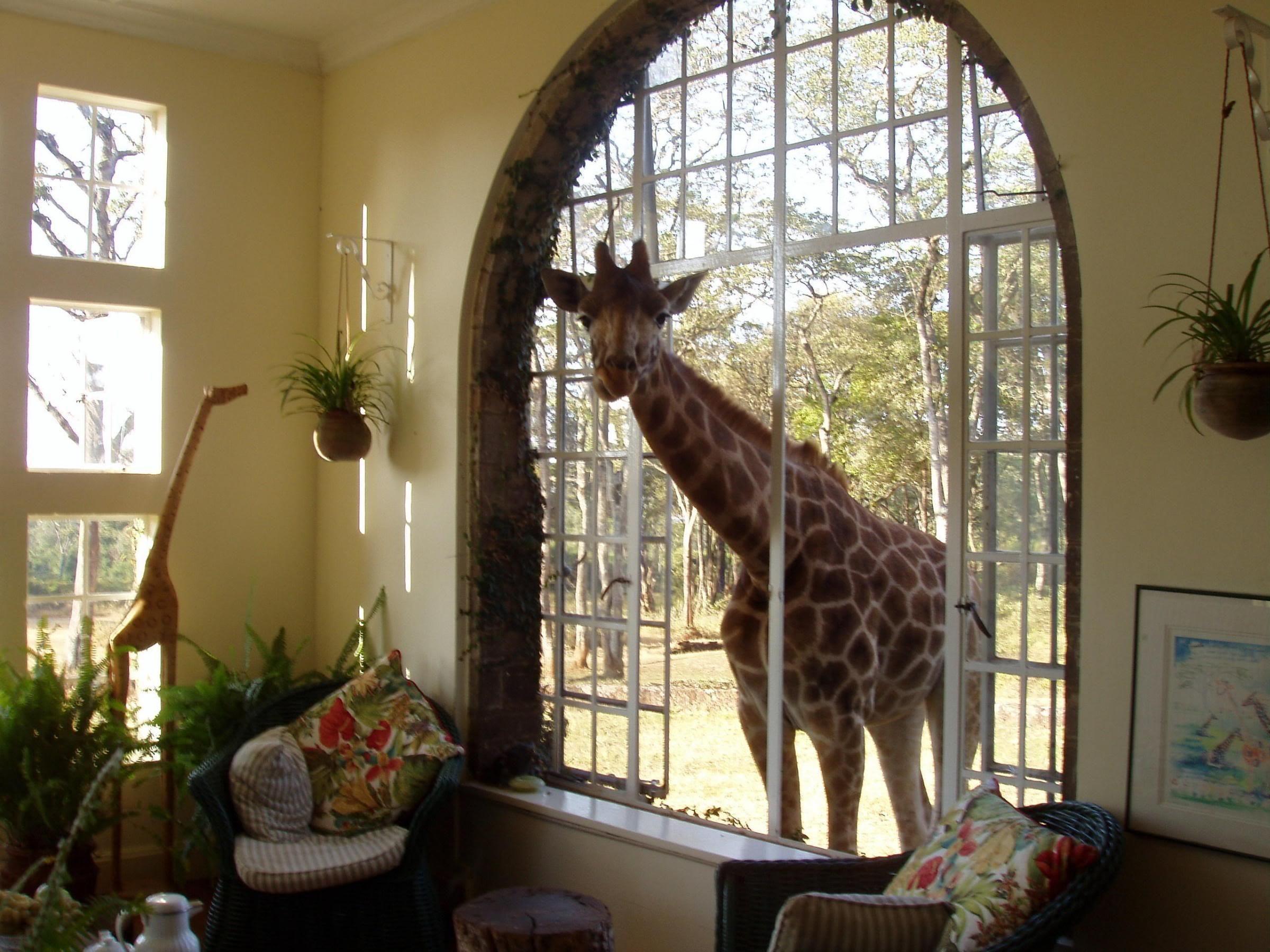 Visit giraffe manor in nairobi kenya