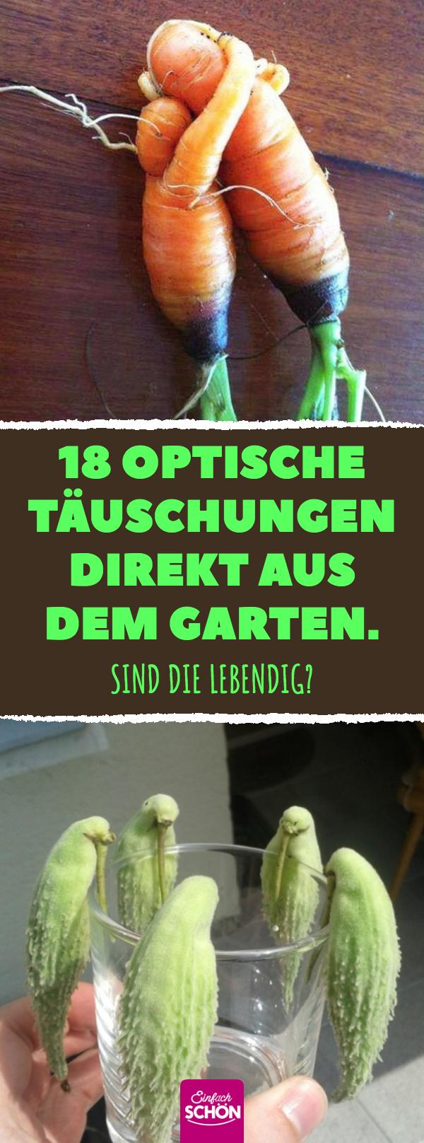 #15 optische Täuschungen direkt aus dem Garten #kuriositäten
