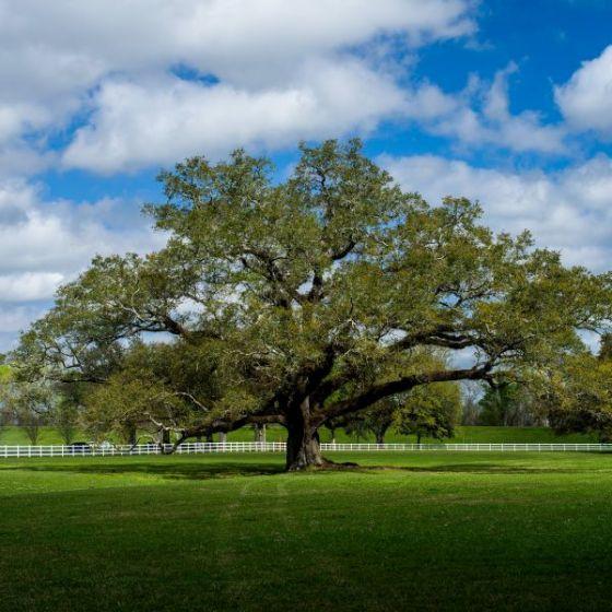 Pin On Landscape Texas Deer Resistant
