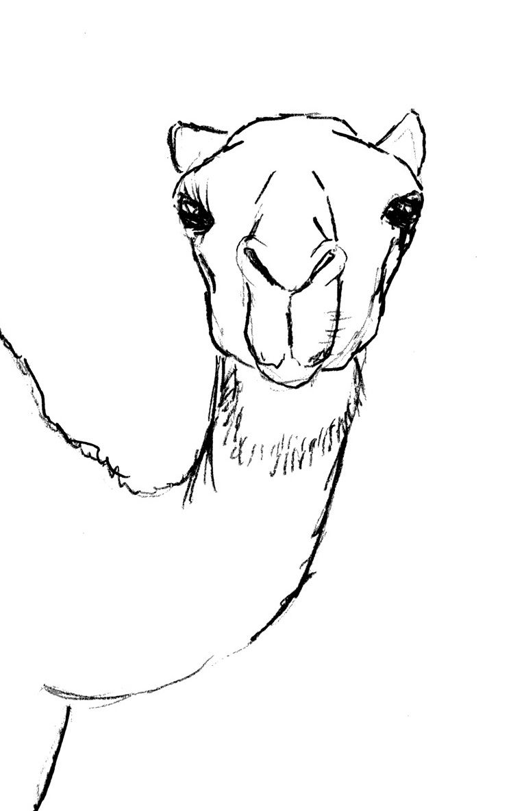 Uncategorized How To Draw A Camel Step By Step draw camel head art and craft pinterest camels journaling head