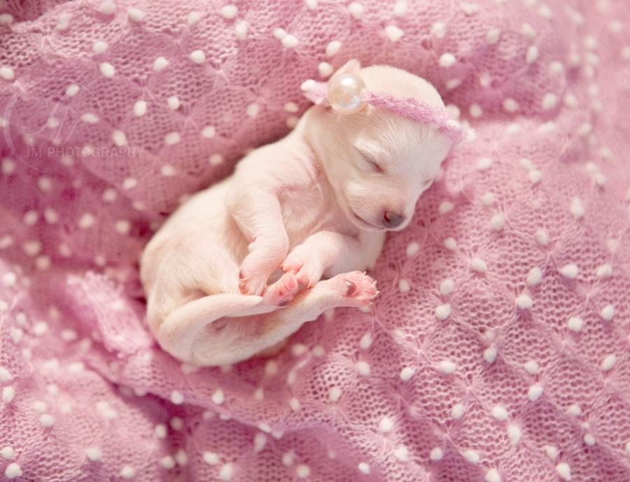 So Adorable This Newborn Puppy Photoshoot Will Melt Your Heart Newborn Puppies Puppy Dog Photos Puppy Litter