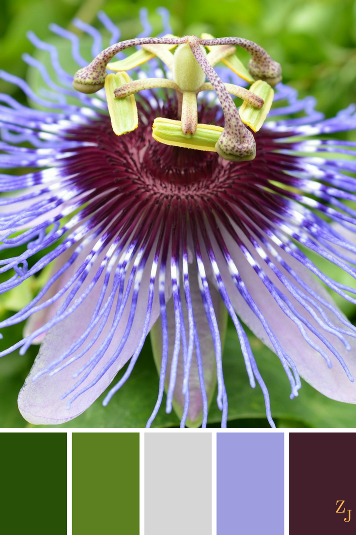 Zj Colour Palette 142 Colourpalette Colourinspiration Passion Flower World Of Color Flower Oil