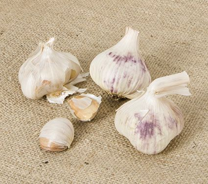 Garlic Inchelium Red: height: 10 inches spacing: 6 inches light: full sun