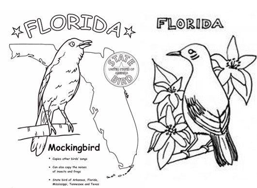 Florida Mockingbird Coloring Page Florida State Symbol Coloring Pages Dolphin Coloring Pages Princess Coloring Pages