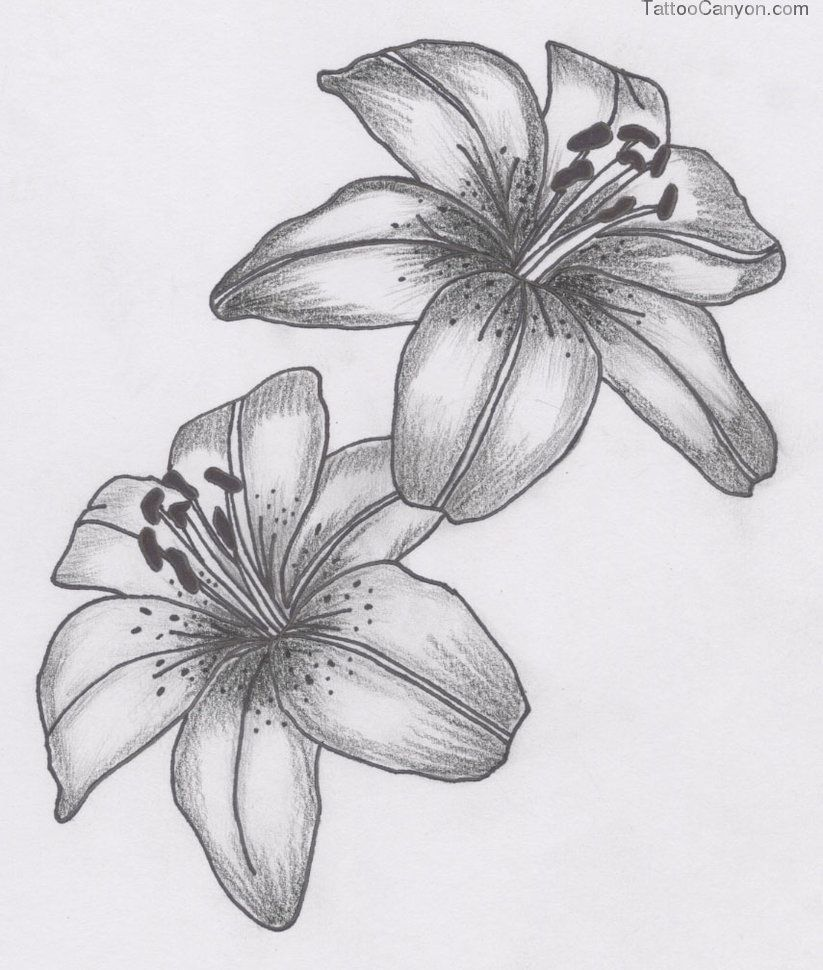 Lily flower tattoo google search tattoos pinterest lily design for tattoos lily flower dhlflorist Images