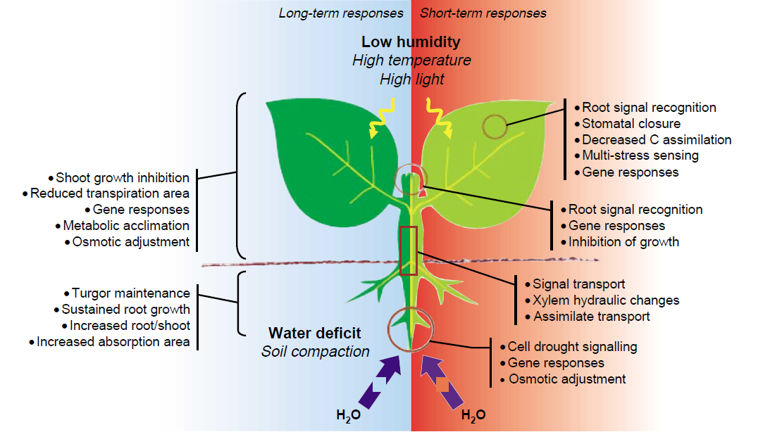 Plant development water study