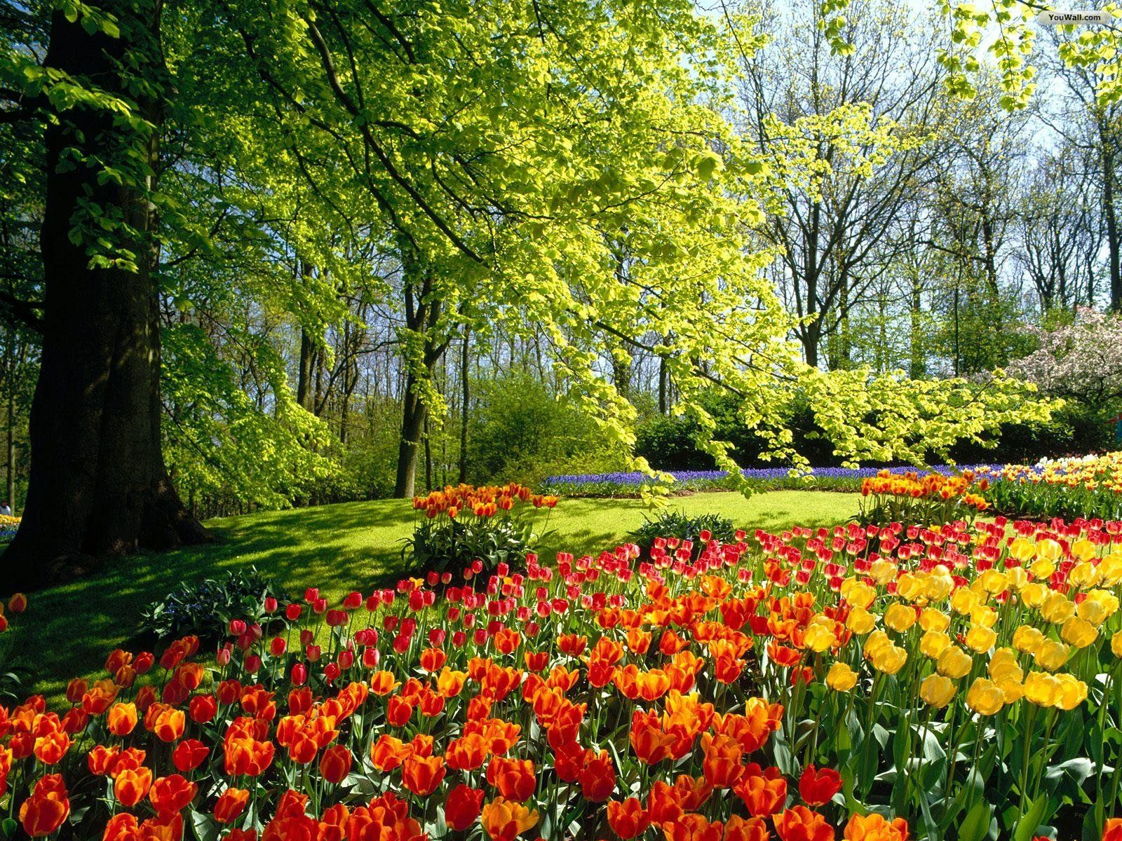 Image Detail For Beautiful Flower Garden Wallpapers Beautiful - Colorful flower garden background