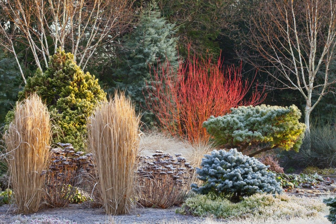 Winter Garden Ideas Uk Part - 33: Border At The Winter Garden, Bressingham Gardens, Norfolk, UK. Abies  Lasiocarpa Var