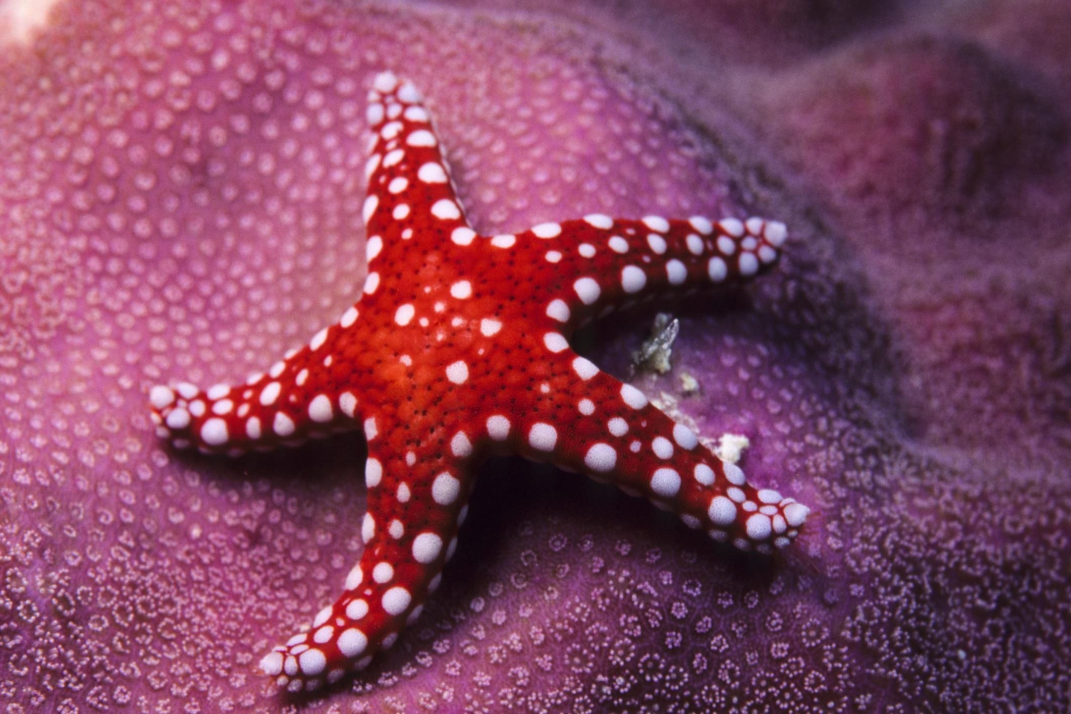 Image result for starfish | tattoo ideas | Pinterest | Starfish and ...