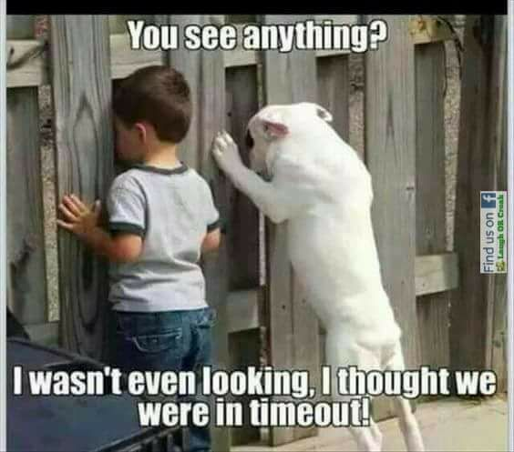 Only Dog Owners Will Understand These Joys Of Dog Ownership Viraluck Dogs Funny Dog Memes Funny Dog Memes Dogs And Kids