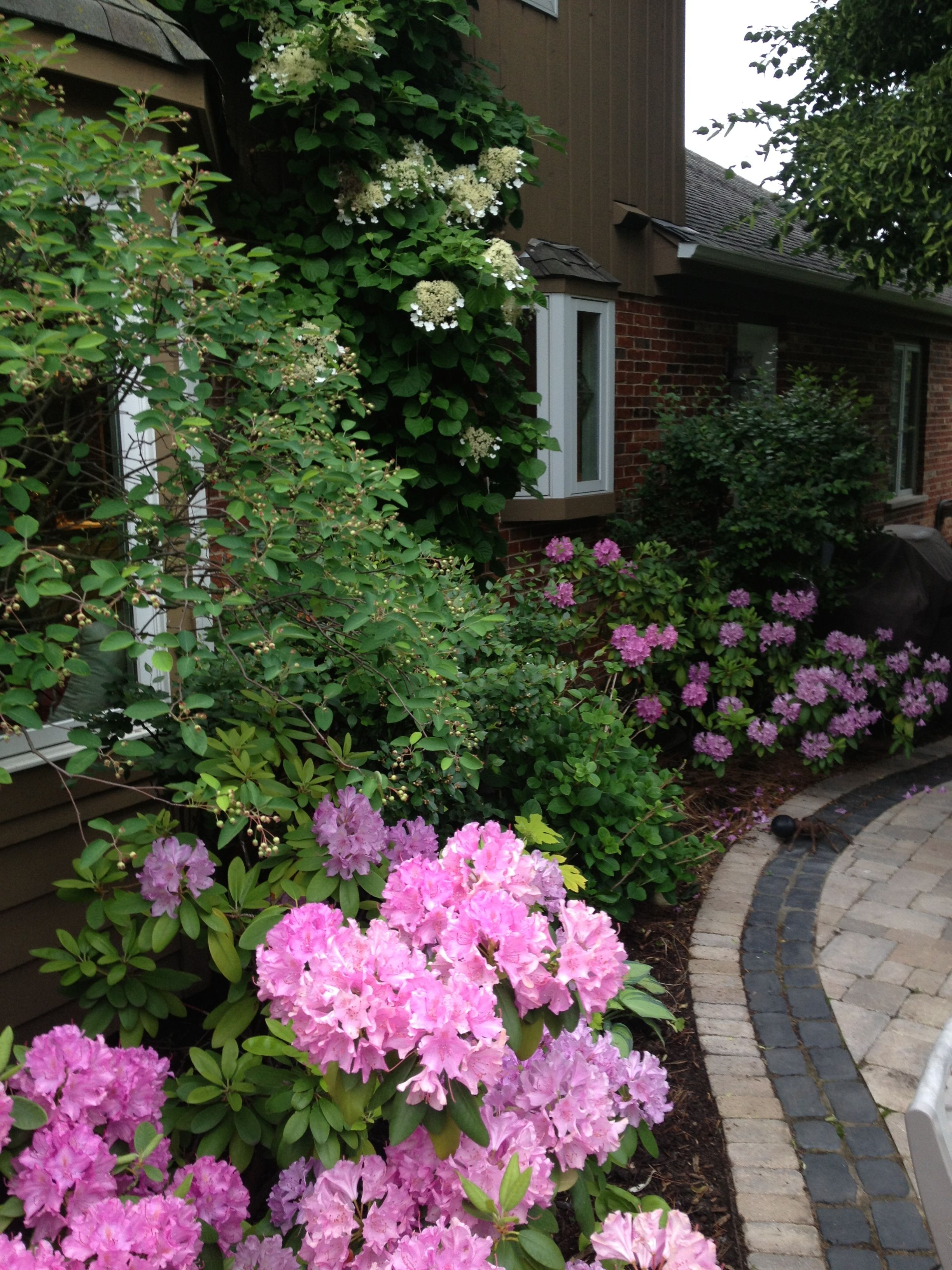 English Garden Foundation Plants Rhododendron Astilbe Pjm And