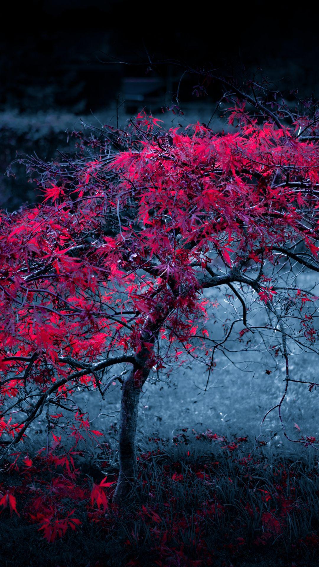 Tree Leaves Fog Light Purple Autumn iPhone 8 Wallpapers