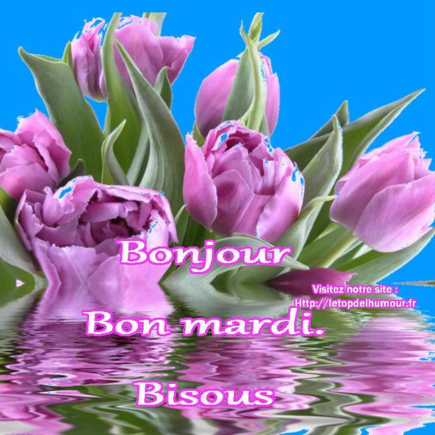 Bon mardi for Bouquet de fleurs humour
