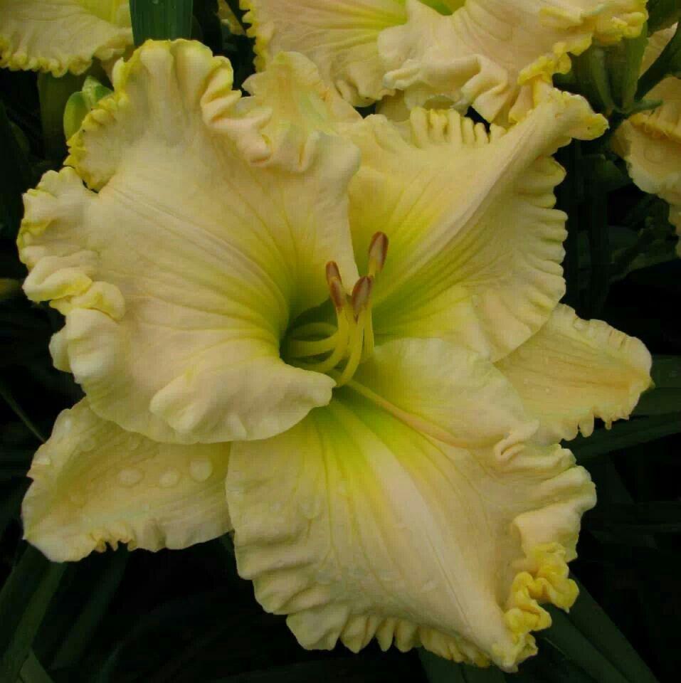 57 Amazing Beautiful Garden Ideas Inspiration And: CYNTHIA DAWN Www.brownsferrygardens.com