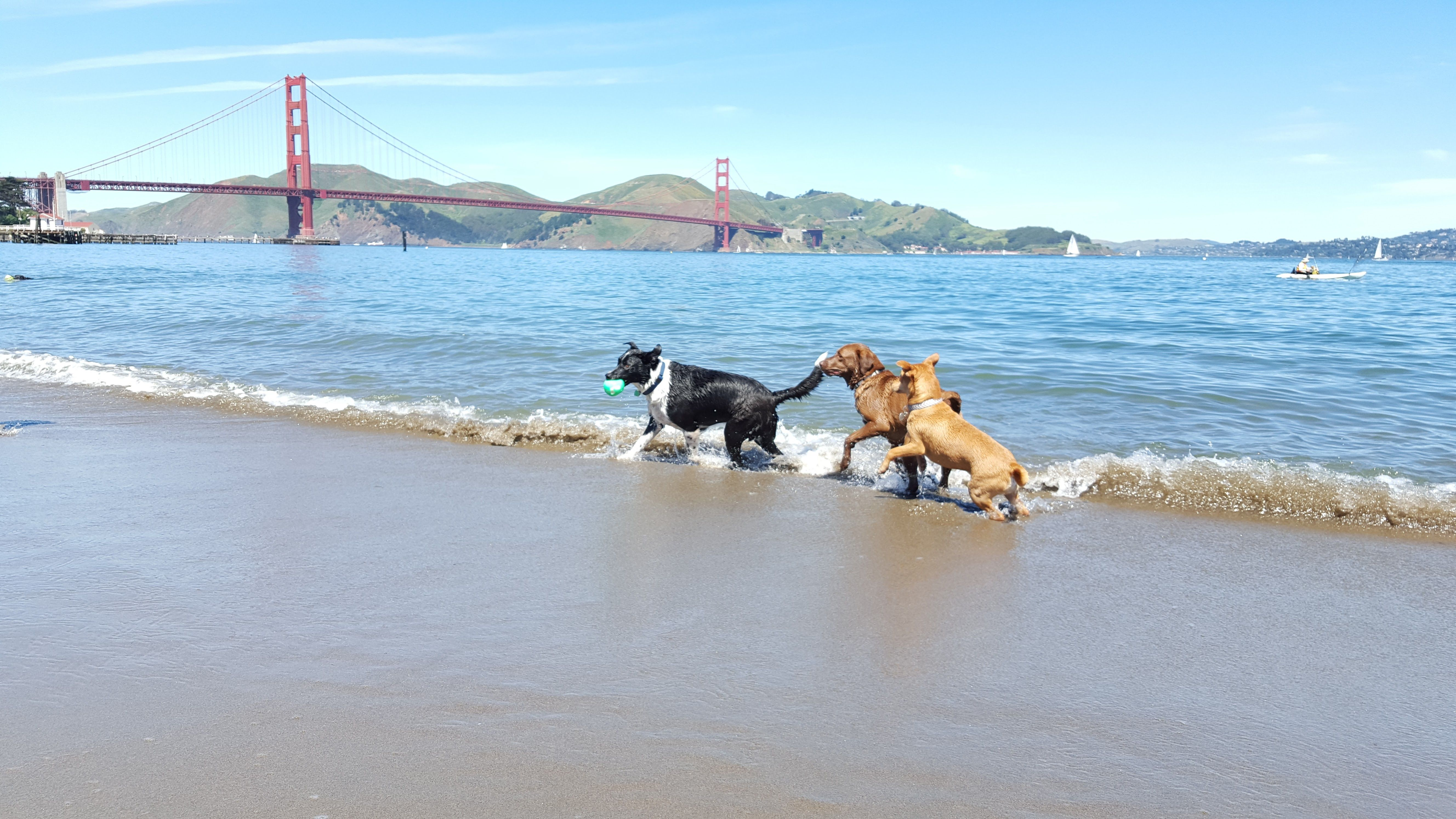Dog-Friendly San Francisco: All the Best Parks, Restaurants