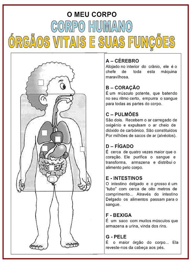 Corpo Humano   Rérida Maria   estudo do meio   Pinterest   Ciencia ...