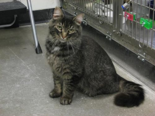Res Q Pets Hamilton Nj With Images Animal Shelter Cats Animals