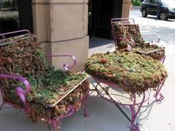 growing plants old furniture - Google Search