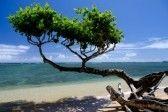 Kauai : Beautiful  small heliotrope tree cast a shadow over water at Anini beach, North shore, Kauai