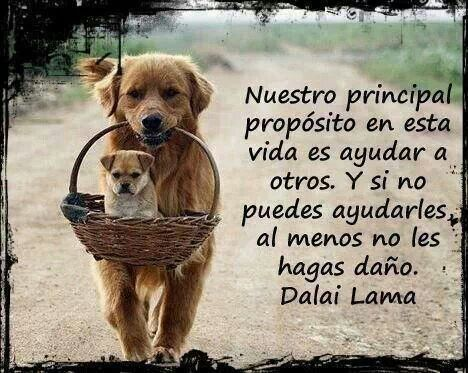 No Al Maltrato Animal Animals Perros Frases Frases Y