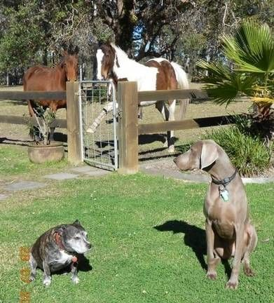 Quiet Cosy Country 2nd Home House Sitter Needed Bungwahl Forster Forster Mid North Coast Nsw Australia May 29 2015 For 9 Weeks Dog Lovers Barney Friends Animals