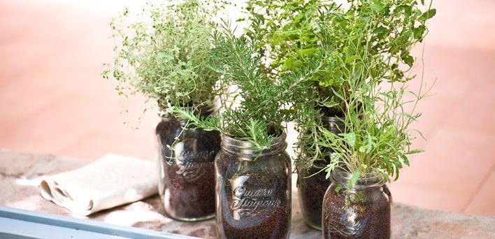 Coltivare l\'origano: L\'origano è una delle piante aromatiche ...