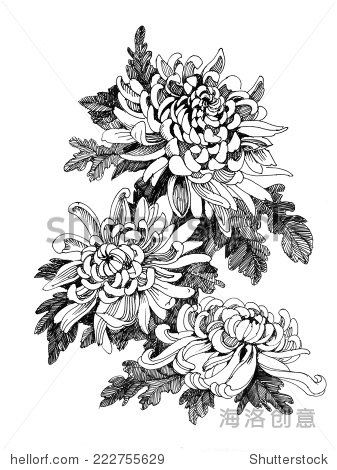 Hand drawing chrysanthemum flower vector illustration 正版图片在线 ...