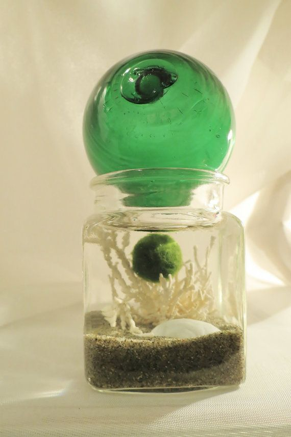Pet Marimo Moss Ball Green Fishing Float (With images