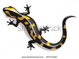 Bildergebnis für Tattoos realistic salamander