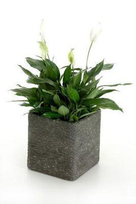 Stone 50 - Blumenkübel in edler Schieferstein-Optik