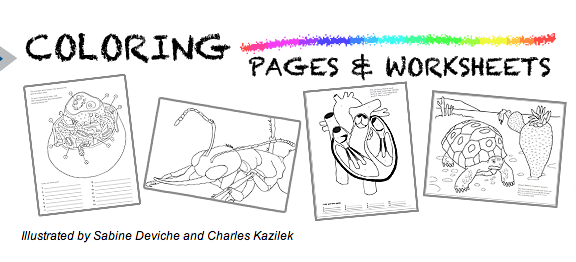 Ask a Biologist. Free coloring pages and worksheets. Cells