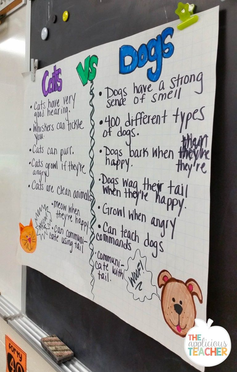 Writing about dogs and cats