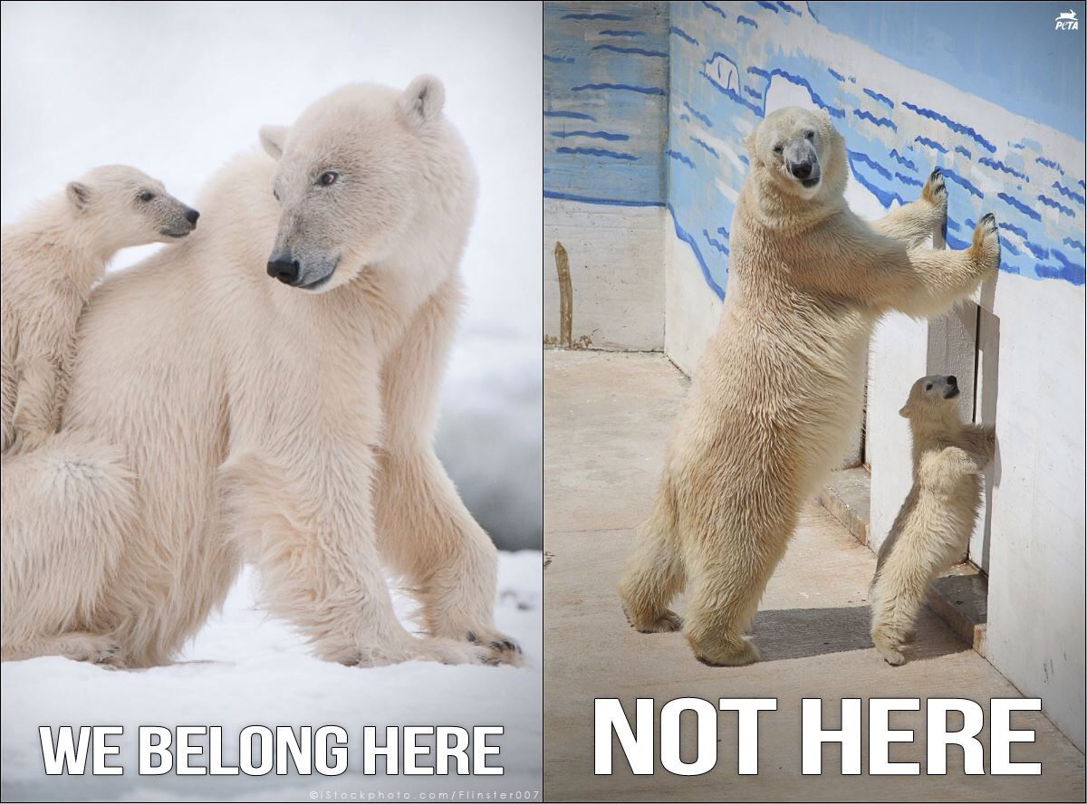 Animals are not here for our entertainment Polar bear