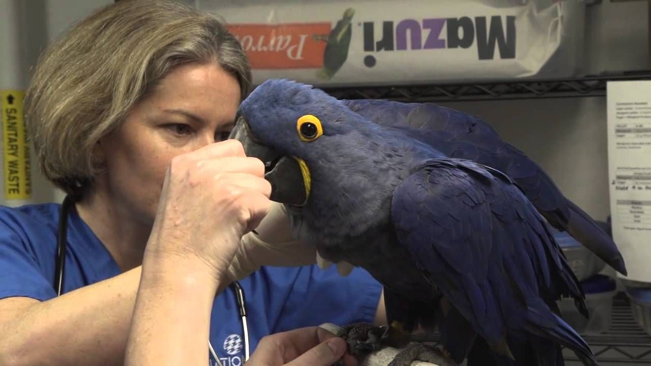Margaret's Annual Exam Get a behind-the-scenes look at how [National Aquarium] trained Margaret, [their] hyacinth macaw, to voluntarily participate in her annual exam with [their] vet staff!