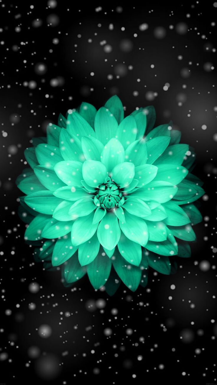 Wallpaper Of Beautiful Teal Flower Pretty Wallpapers Teal Flower Wallpaper Flower Iphone Wallpaper