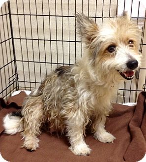 Dallas Tx Terrier Unknown Type Small Mix Meet Star A Dog