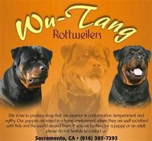 Wu Tang Rottweilers Bing Images Rottweiler