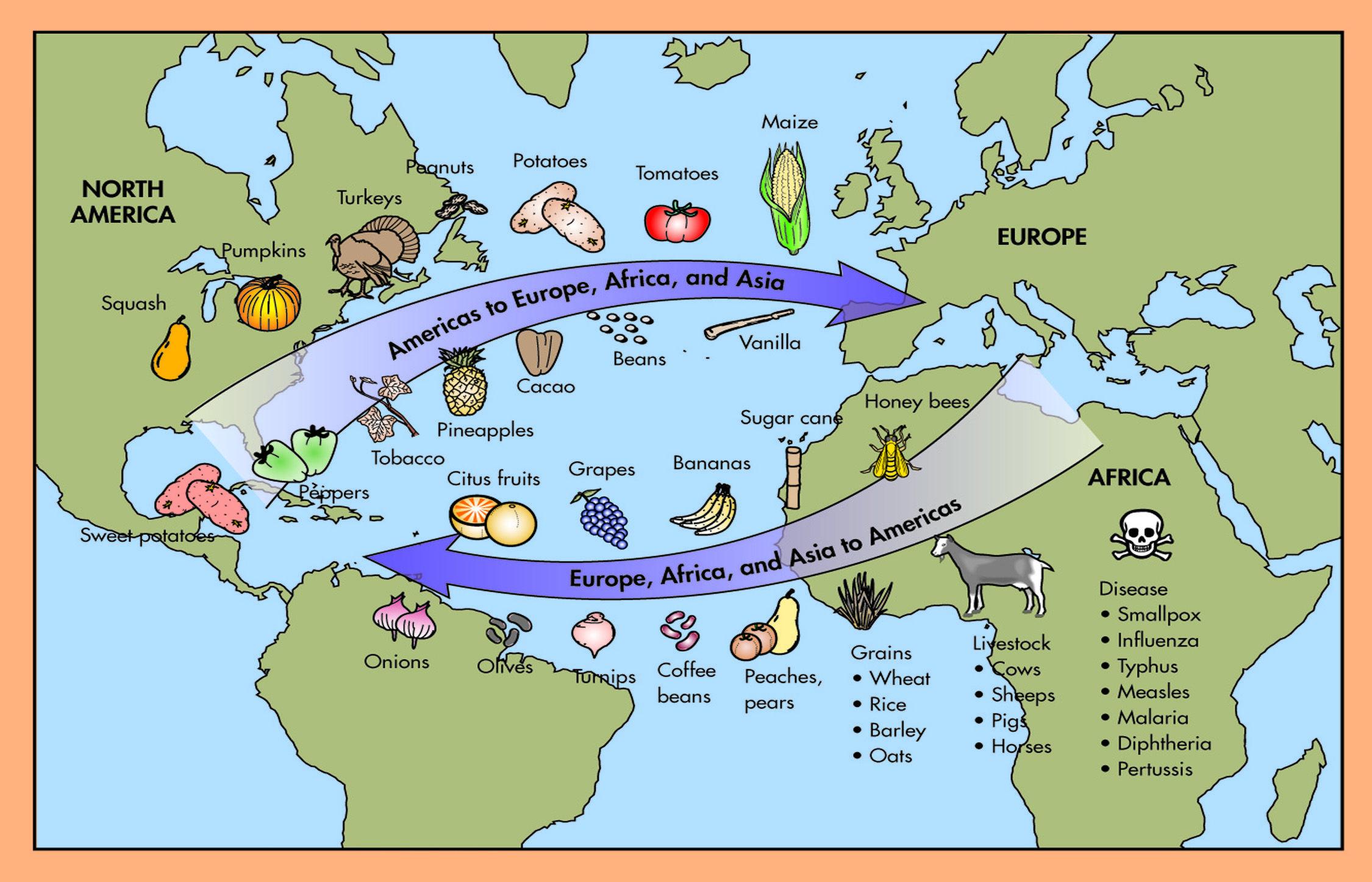 worksheet The Columbian Exchange And Global Trade Worksheet columbian exchange discovery education diagram jpg jpg