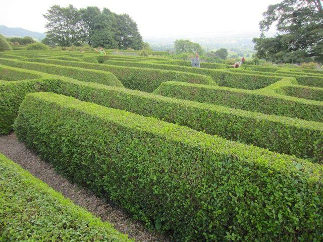 Los arbustos que al ser podados se pueden moldear en formas