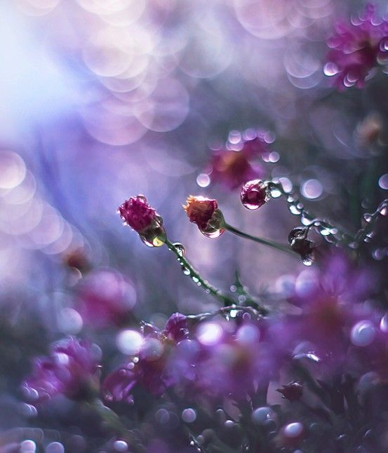 Pin Von Kathrin Wagner Auf Pflanzen: Wassertropfen, Blumen