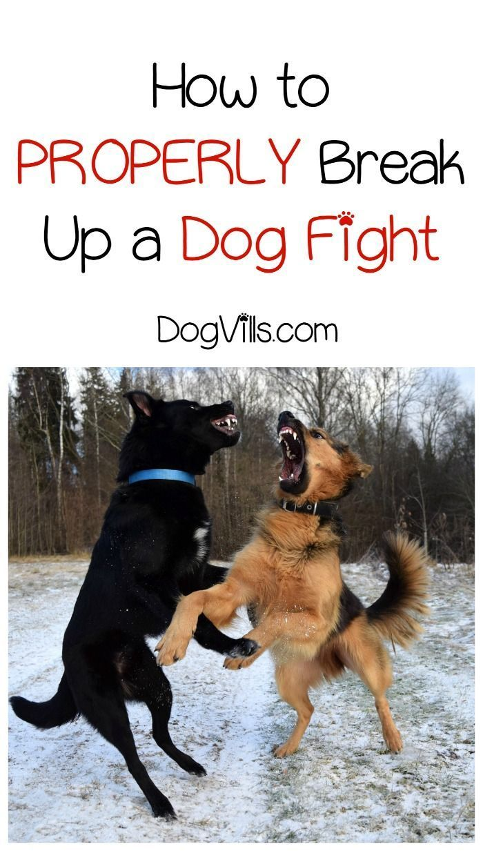 How Do You Break Up A Fight Between Two Dogs Dog Training Dogs