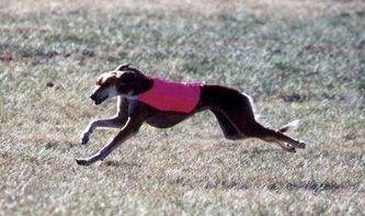 Excessive Dog Barking Ordinance