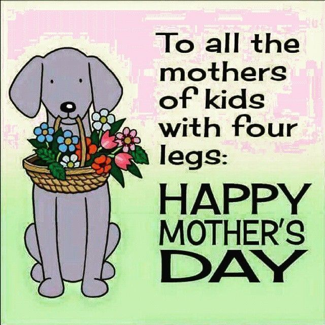 To All The Mothers Of Kids With Four Legs Happy Mother S Day Happy Dog Mothers Day Happy Mom Day Dog Mothers Day