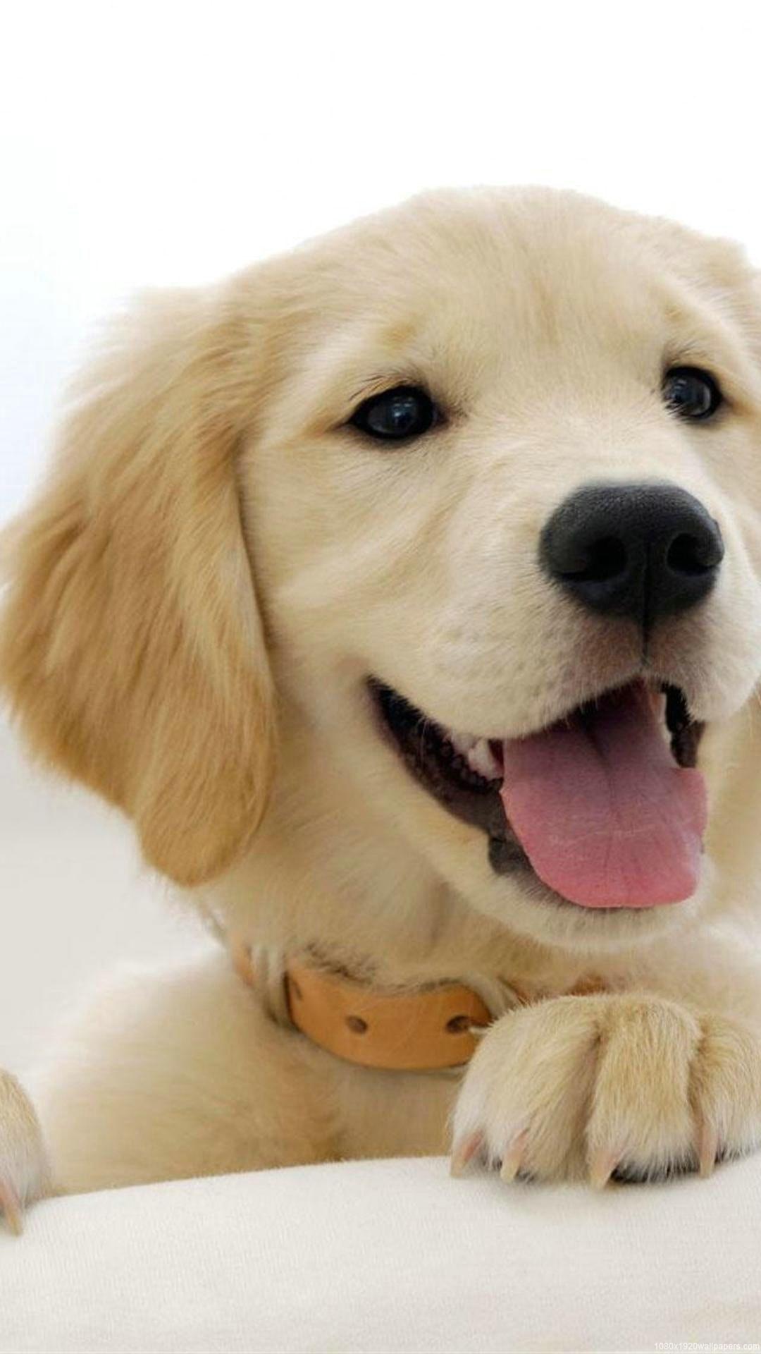 Golden Retriever Dog Wallpaper Android Animals Wallpapers Ideas
